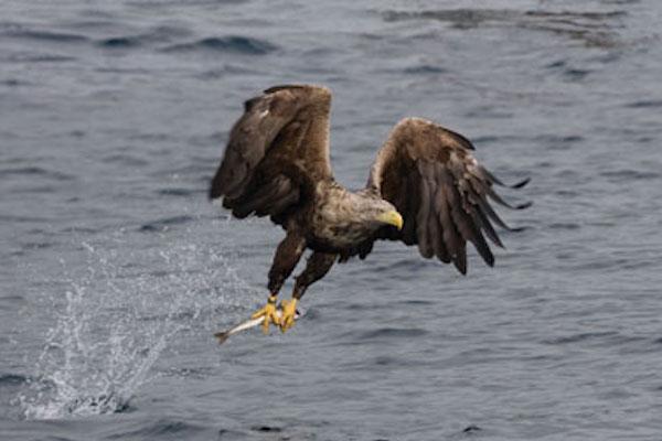 Skye Birds